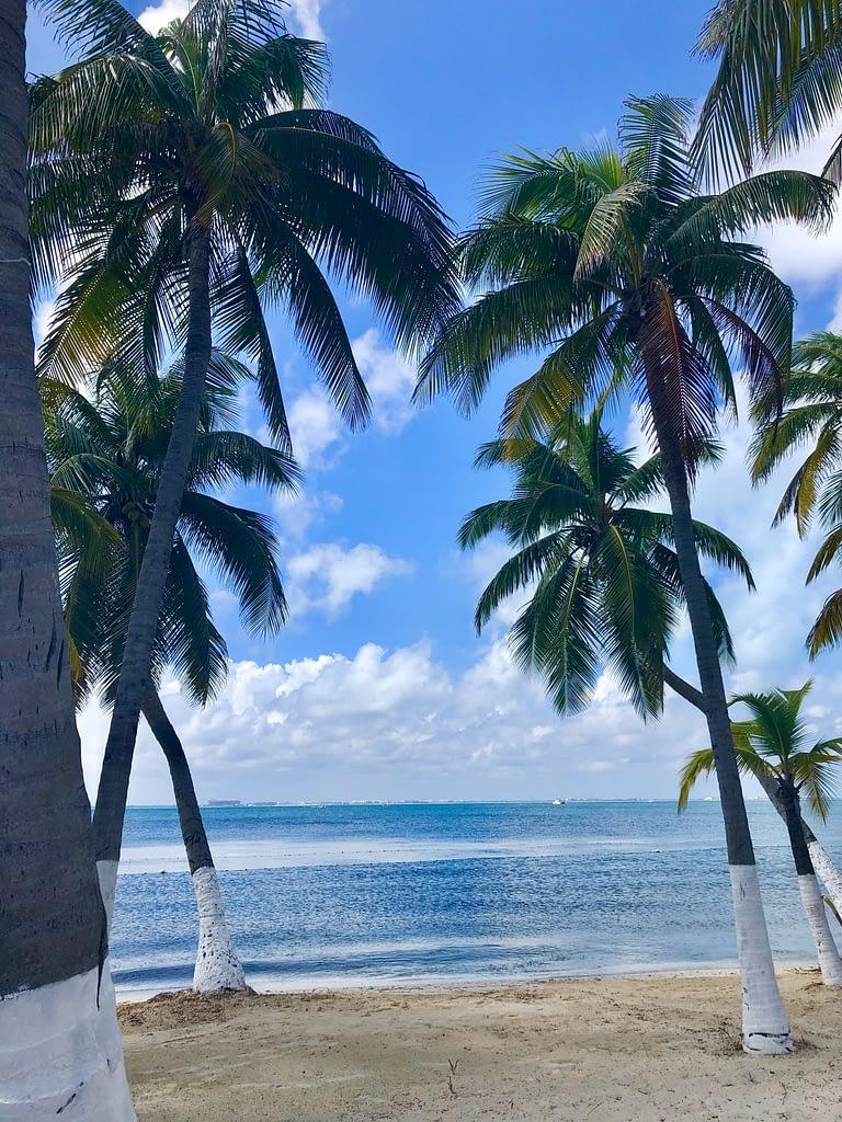 Palm Trees on Isla Mujeres
