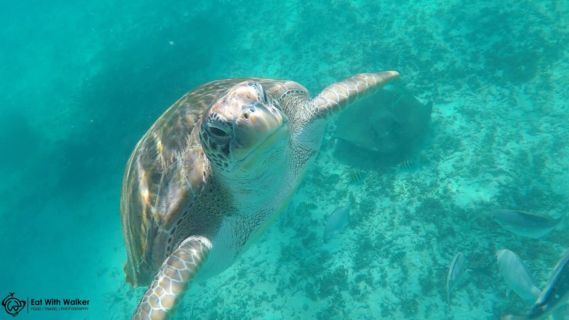 Swimming with Turtle - Tulum
