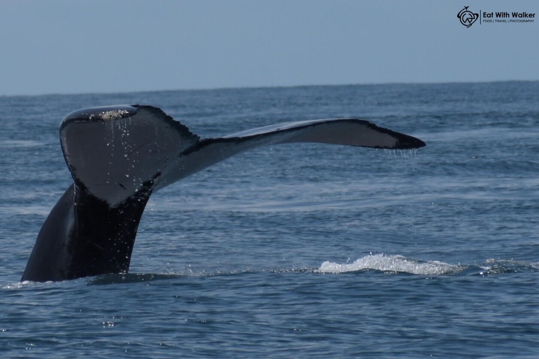 Whale's Tail - Uvita