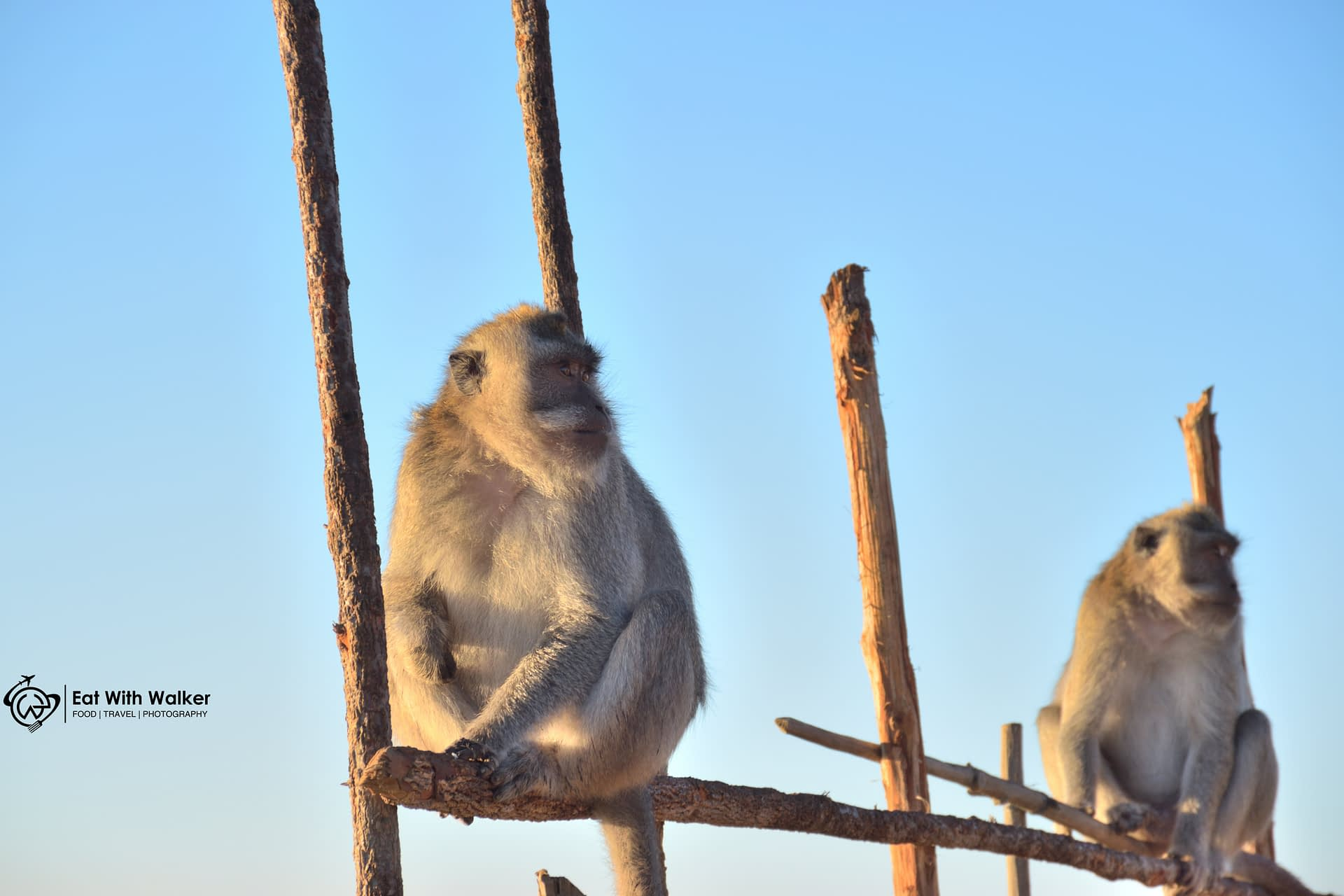 Monkeys at the top of Mount Batur - Bali