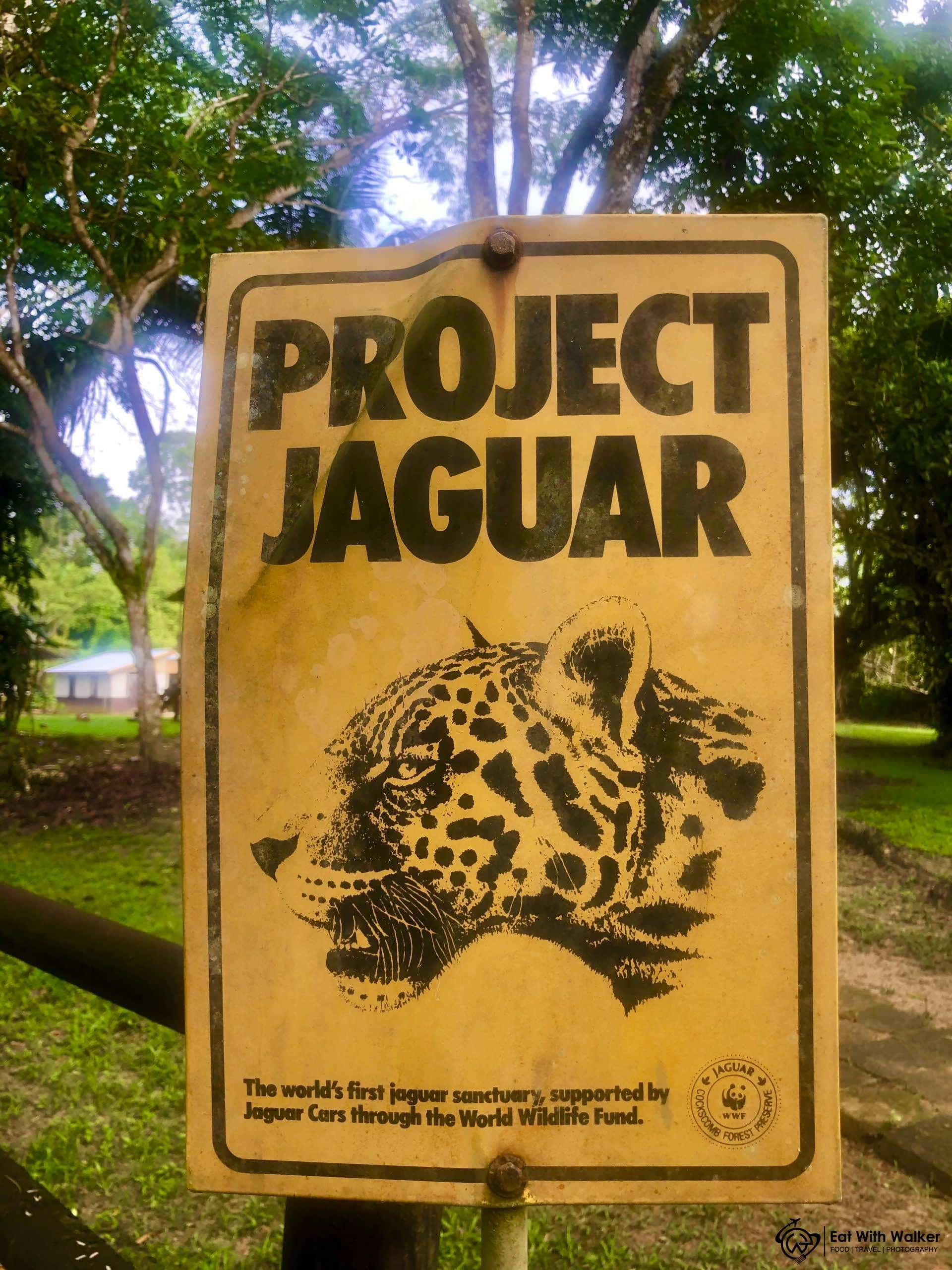 World's First Jaguar Reserve - Cockscomb Wildlife Basin