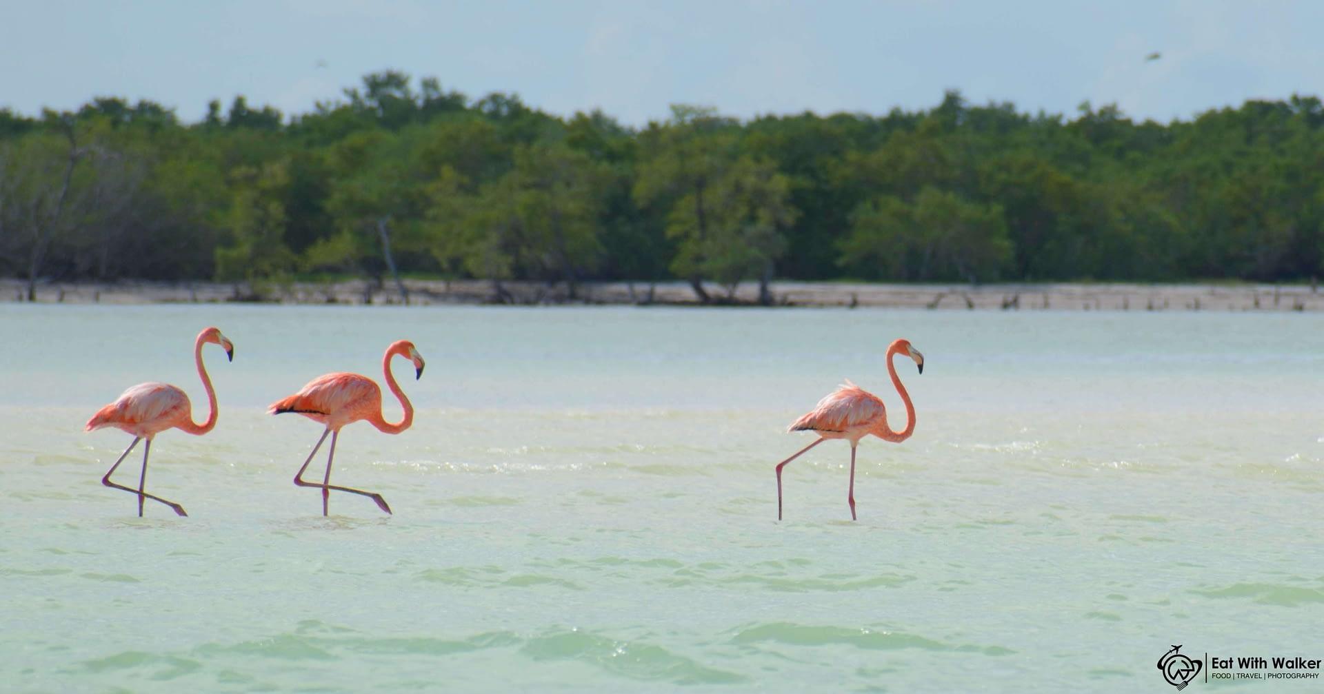 Flamingos - Punta Cocos